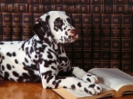 Smart dalmatian desktop wallpapers|free hq hd wallpapers Smart dalmatian