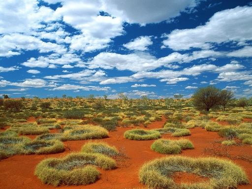 Old Spinifex Rings  Little Sandy Desert  Australia desktop wallpapers. Old Spinifex Rings  Little Sandy Desert  Australia free hq wallpapers. Old Spinifex Rings  Little Sandy Desert  Australia