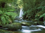 Hopetoun Falls  Aire River  Otway National Park  Victoria  Australia desktop wallpapers|free hq hd wallpapers Hopetoun Falls  Aire River  Otway National Park  Victoria  Australia