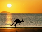 Taking Joey Home  Australia desktop wallpapers|free hq hd wallpapers Taking Joey Home  Australia