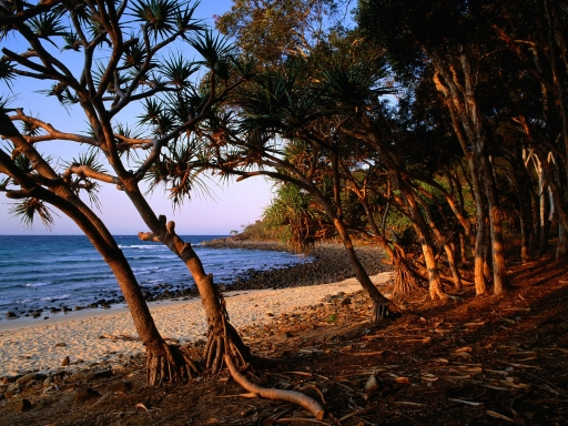 Tea Tree Beach  Noosa National Park  Queensland  Australia desktop wallpapers. Tea Tree Beach  Noosa National Park  Queensland  Australia free hq wallpapers. Tea Tree Beach  Noosa National Park  Queensland  Australia