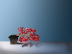 3D red bonsai desktop wallpapers|free hq hd wallpapers 3D red bonsai