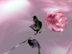 3D rose flower desktop wallpapers|free hq hd wallpapers 3D rose flower