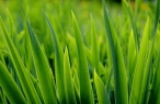 Grass desktop wallpapers|free hq hd wallpapers Grass