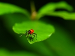 Red insect desktop wallpapers|free hq hd wallpapers Red insect