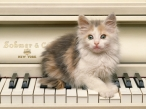 Cat on pianino desktop wallpapers|free hq hd wallpapers Cat on pianino