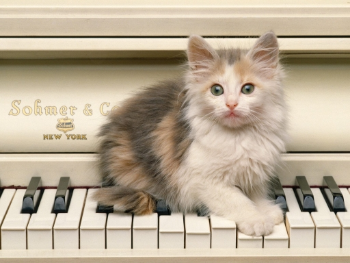 Cat on pianino desktop wallpapers. Cat on pianino free hq wallpapers. Cat on pianino
