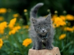 Kitten desktop wallpapers|free hq hd wallpapers Kitten