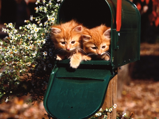 Cats in mailbox desktop wallpapers. Cats in mailbox free hq wallpapers. Cats in mailbox
