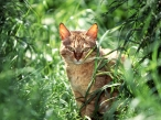 Cat in grass desktop wallpapers|free hq hd wallpapers Cat in grass