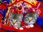 Cats in the thread desktop wallpapers|free hq hd wallpapers Cats in the thread