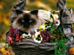 Cat in vases desktop wallpapers|free hq hd wallpapers Cat in vases