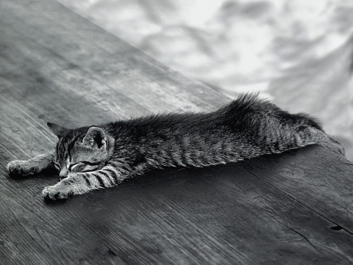 Cat  Black white desktop wallpapers. Cat  Black white free hq wallpapers. Cat  Black white