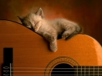 Cat on guitar desktop wallpapers|free hq hd wallpapers Cat on guitar