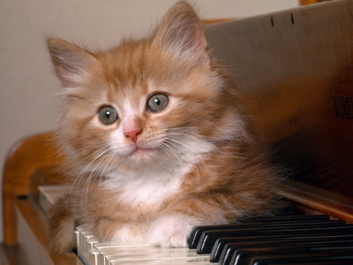Cat on piano keys desktop wallpapers. Cat on piano keys free hq wallpapers. Cat on piano keys