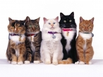Cats at show desktop wallpapers|free hq hd wallpapers Cats at show
