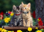 Cats on benches desktop wallpapers|free hq hd wallpapers Cats on benches