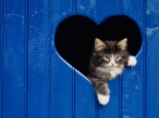 Cat in heart window desktop wallpapers|free hq hd wallpapers Cat in heart window