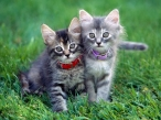 Cats friendship desktop wallpapers|free hq hd wallpapers Cats friendship