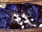 Cats at rest desktop wallpapers|free hq hd wallpapers Cats at rest