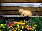 Cat near the flowers desktop wallpapers|free hq hd wallpapers Cat near the flowers