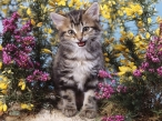 Cat in flowers desktop wallpapers|free hq hd wallpapers Cat in flowers