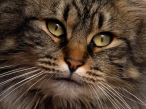 Cats eyes desktop wallpapers|free hq hd wallpapers Cats eyes