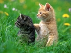 Cats in grass desktop wallpapers|free hq hd wallpapers Cats in grass