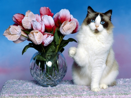 Cat and flowers desktop wallpapers. Cat and flowers free hq wallpapers. Cat and flowers