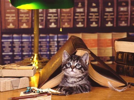 Cat under book desktop wallpapers. Cat under book free hq wallpapers. Cat under book