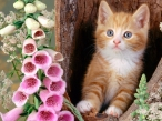 Cat in the hollow desktop wallpapers|free hq hd wallpapers Cat in the hollow