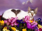 Cats desktop wallpapers|free hq hd wallpapers Cats