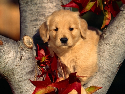Puppy on tree desktop wallpapers. Puppy on tree free hq wallpapers. Puppy on tree