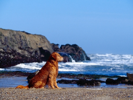 Dog at ocean beach desktop wallpapers. Dog at ocean beach free hq wallpapers. Dog at ocean beach