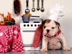 Dog cook desktop wallpapers|free hq hd wallpapers Dog cook