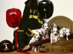 Fire puppies desktop wallpapers|free hq hd wallpapers Fire puppies