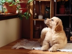 Dog on floor desktop wallpapers|free hq hd wallpapers Dog on floor