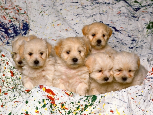 Nice puppies desktop wallpapers. Nice puppies free hq wallpapers. Nice puppies