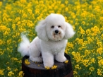 Dog on bunghole desktop wallpapers|free hq hd wallpapers Dog on bunghole