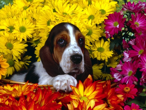 Dog and yellow flowers desktop wallpapers. Dog and yellow flowers free hq wallpapers. Dog and yellow flowers