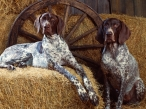 Dogs in a shed desktop wallpapers|free hq hd wallpapers Dogs in a shed
