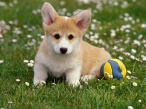Puppy at yard desktop wallpapers|free hq hd wallpapers Puppy at yard