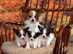 Dogs family desktop wallpapers|free hq hd wallpapers Dogs family