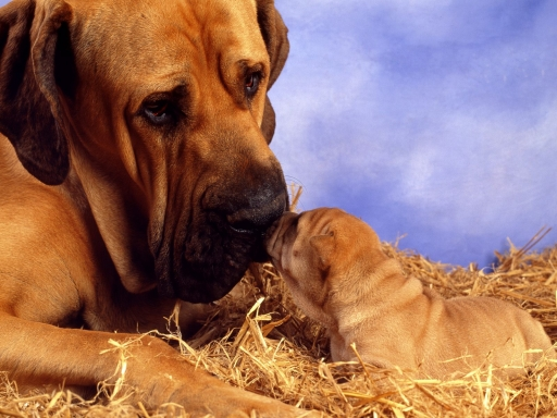 Dogs family desktop wallpapers. Dogs family free hq wallpapers. Dogs family