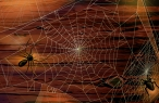 Spiders and web desktop wallpapers|free hq hd wallpapers Spiders and web
