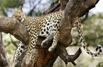 Gepard desktop wallpapers|free hq hd wallpapers Gepard