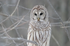 Owl desktop wallpapers|free hq hd wallpapers Owl