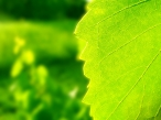 Green leaf desktop wallpapers|free hq hd wallpapers Green leaf
