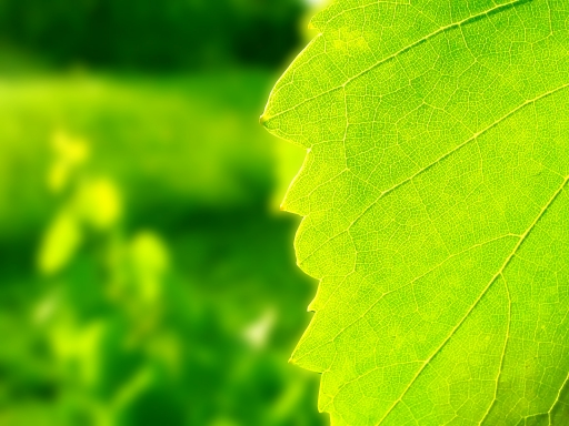 Green leaf desktop wallpapers. Green leaf free hq wallpapers. Green leaf