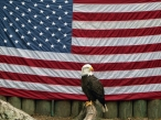 Usa flag and whitehead eagle desktop wallpapers|free hq hd wallpapers Usa flag and whitehead eagle